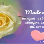 Imágenes de rosas blancas con frases de luto
