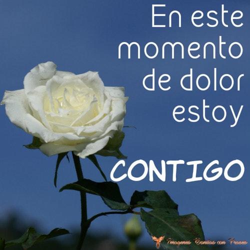 rosas blancas con frases de luto