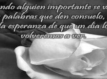 Imágenes de rosas blancas de luto con frases