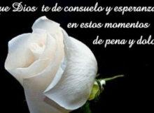 Imágenes de rosas blancas de luto con frases para compartir