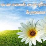 Imágenes de luto con frases bíblicas para descargar gratis