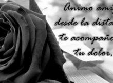 Imágenes de flores negras de luto con frases para compartir