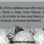 Imágenes de luto con flores blancas para obsequiar en ese duro momento