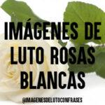 Imágenes de luto rosas blancas